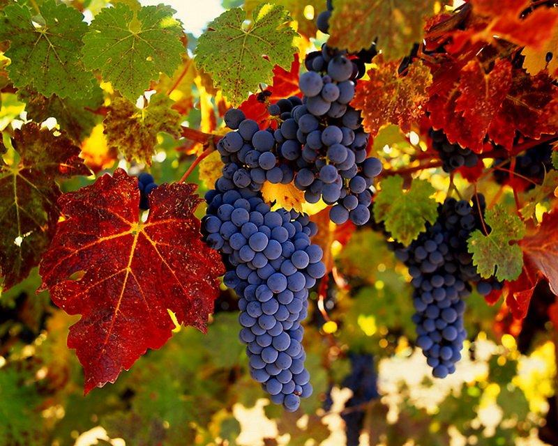 Началось прикольная, картинки про виноград